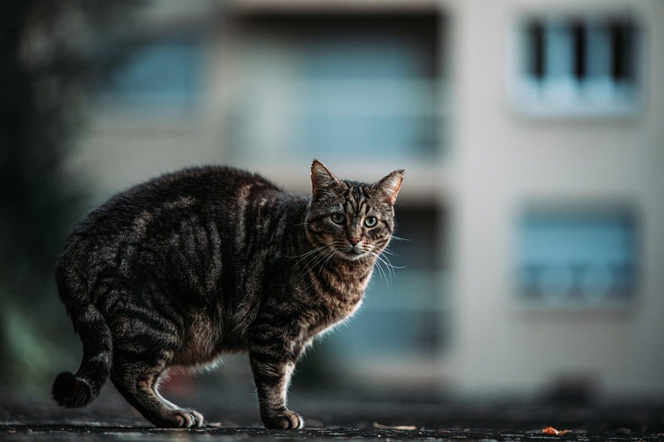 إسهال القطط