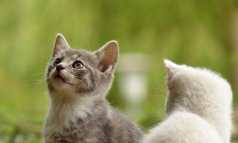 اسماء قطط