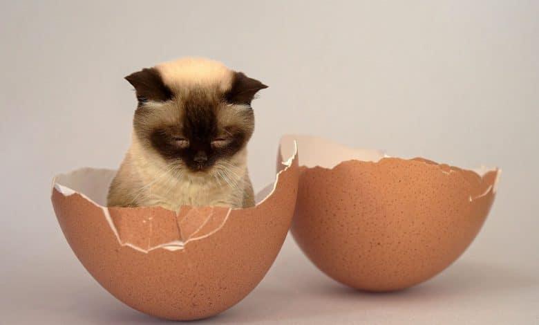 البيض للقطط