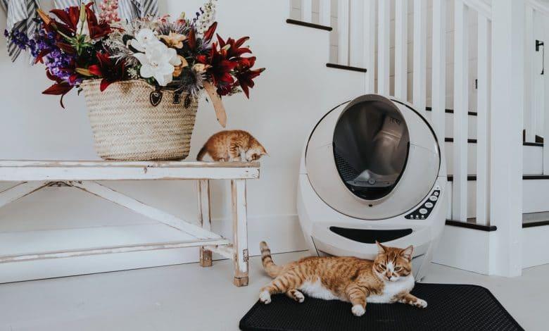 تدريب القطط على صندوق الفضلات