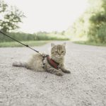 تدريب القط على المشي بالمقود