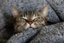 تسمم القطط