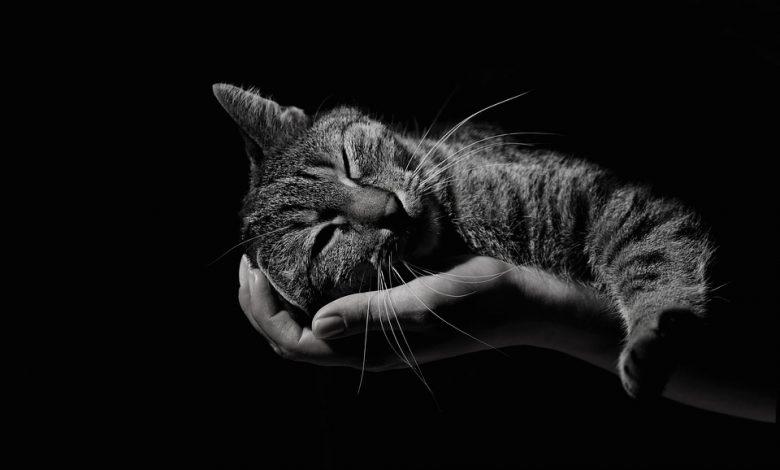 تهدئة القطط