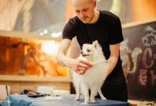 فرشاة إزالة شعر القطط