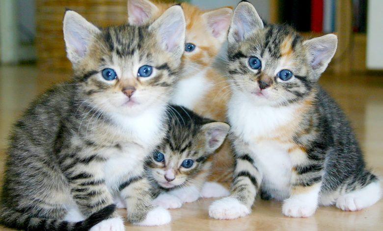 فطام القطط