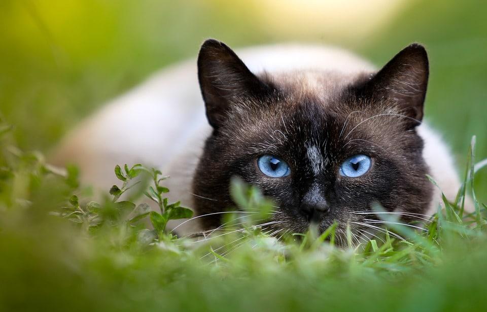 صور قطط 17