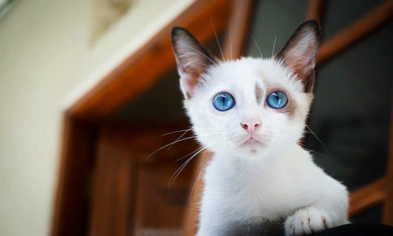 اسماء قطط اناث