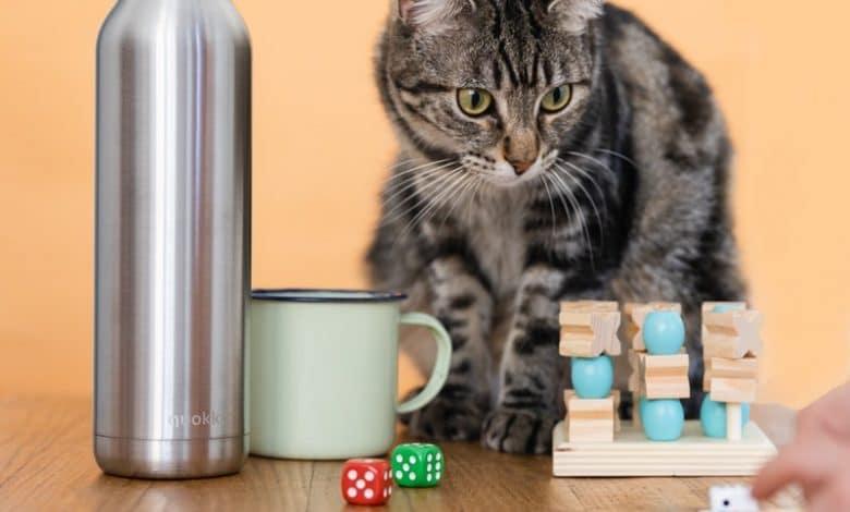 ذكاء القطط مقارنة بالكلاب التي تعرف بهذه الميزة عبر خمس علامات لاتخطئ أبدا