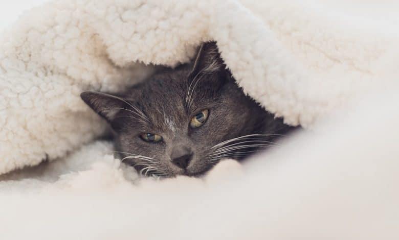 القطط والطقس البارد
