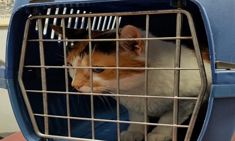صندوق نقل القطط
