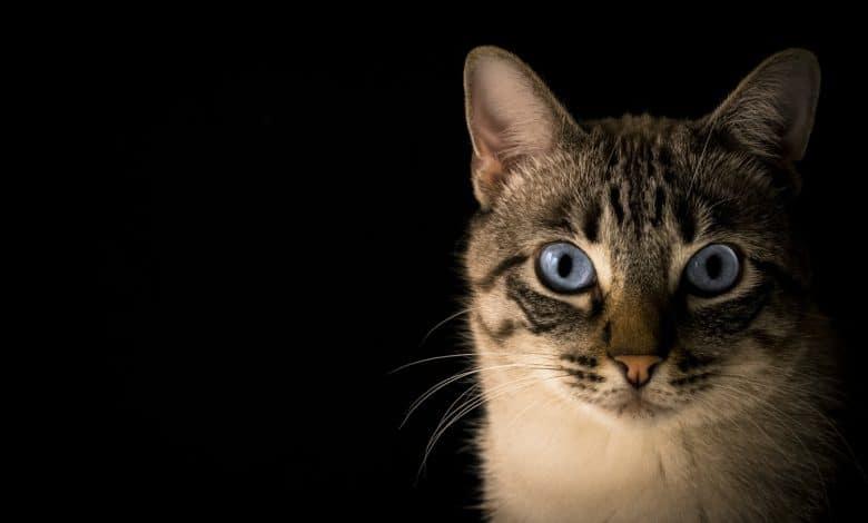 علامات تألم القطط