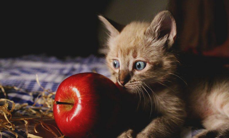 التفاح للقطط