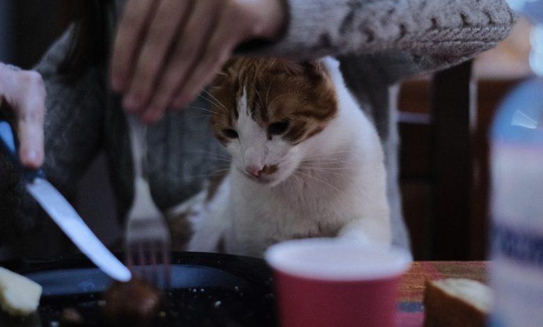 جدول أكل القطط