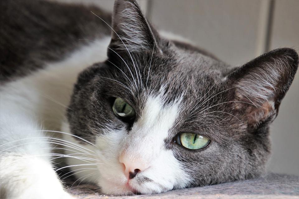 علامات حزن القطط