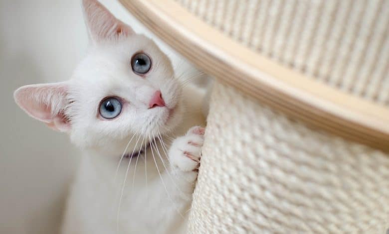 عمود خدش القطط