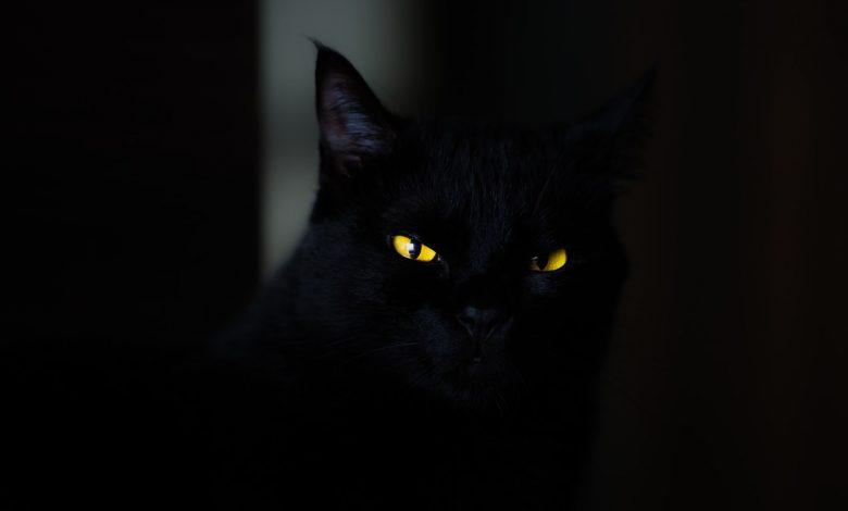 فوبيا القطط