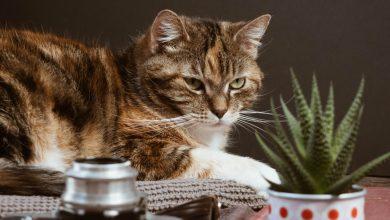 قطتي تأكل النباتات المنزلية