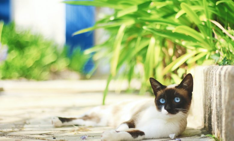 طارد القطط
