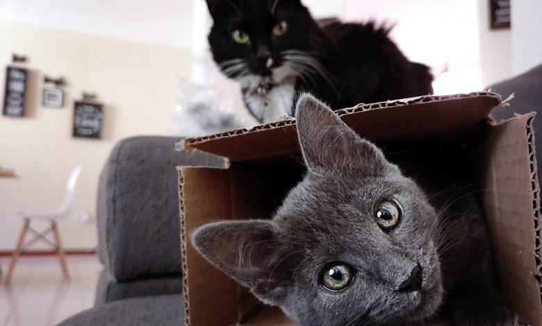 غيرة القطط
