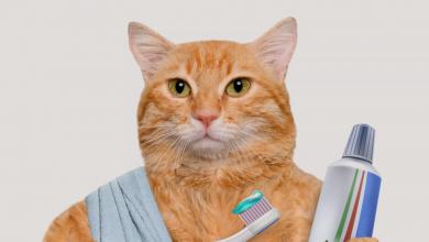 معجون أسنان القطط