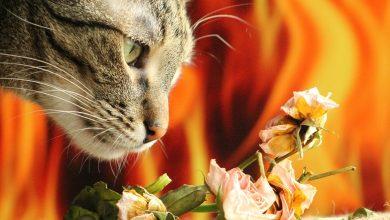 الروائح التي تكرهها القطط
