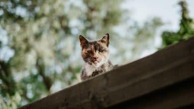 عيوب القطط