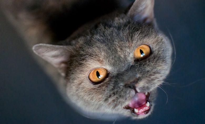 كيف تعرف أن قطتك جائعة